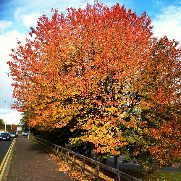 20121027 Autumn loveliness