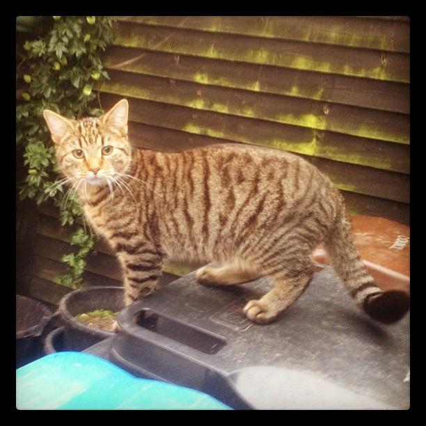 20121202 Mr Kitten