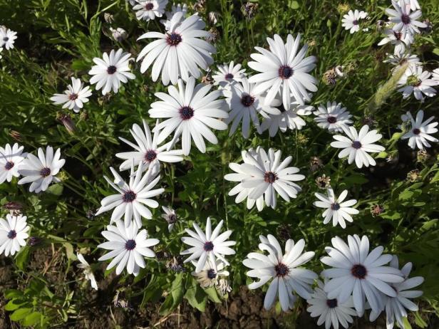Flowers at Sahelion Ki Bari garden