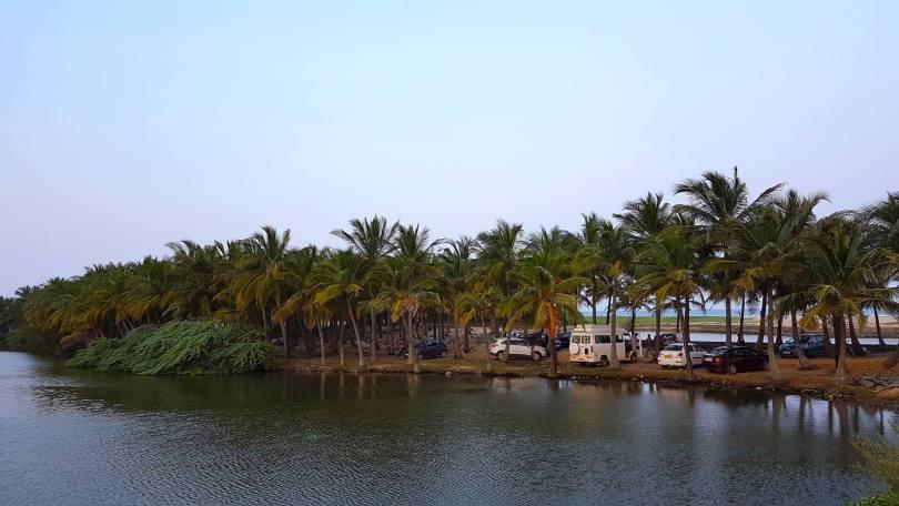 Coconut trees near Veerampattinam Beach