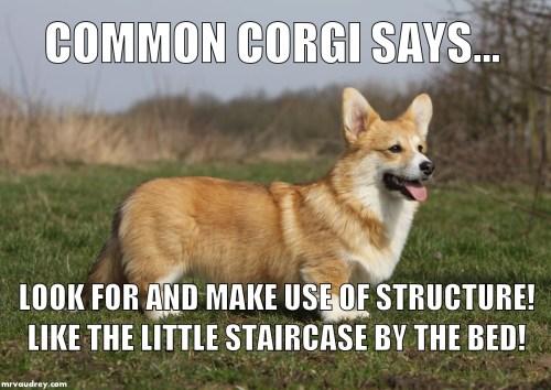 Common Corgi - staircase