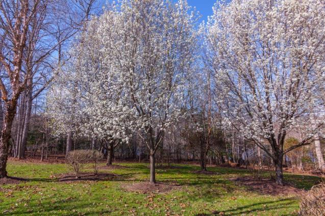 Green Springs Plantation-4