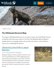 Medium size screenshot of Wildlands Network Blog