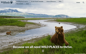 Stunning photo of many bears near river dominates the top section of the Wildlands Network Home Page