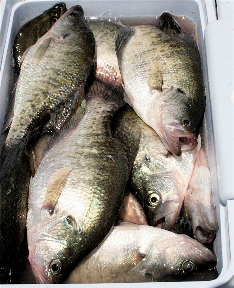 Crappie fishing at Barnett Reservoir is likely to be less affected by flooding this spring as are other bodies of water across the Magnolia State.