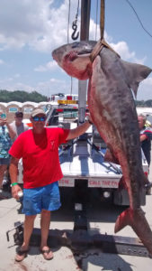 Tiger shark is a special category in the Deep Sea Rodeo. A state-record will be worth S$25,000.