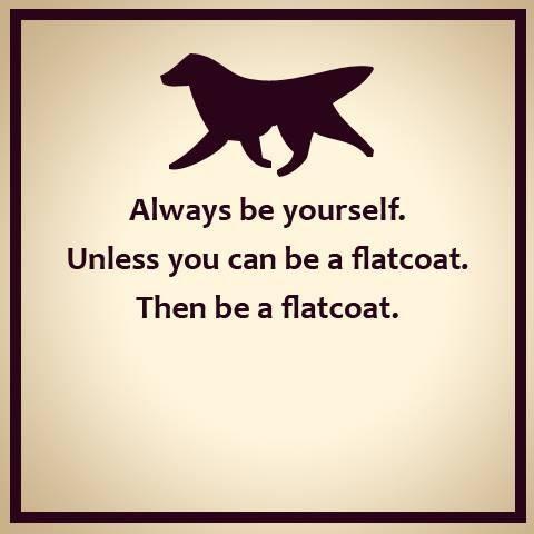 Life advice:
