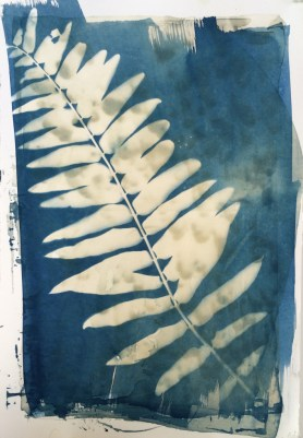 """fern over coral 18""""x12"""""""