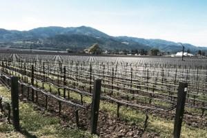 Opus One Winery (Napa valley) Oakville, CA. www.opusonewinery.com