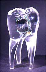 A glass tooth with an embedded audio chip to dementrate integrating technologies into the body (see note at end of images)