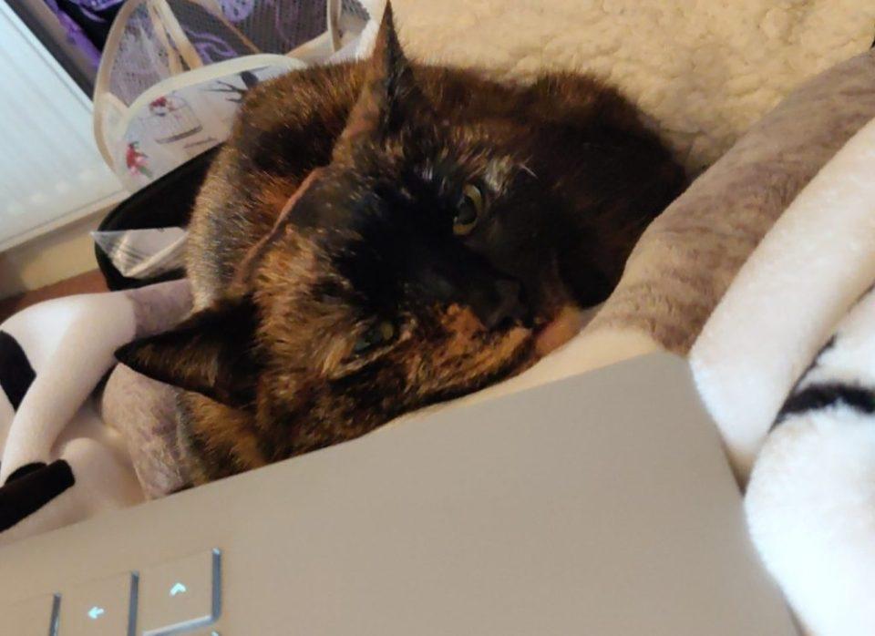 Photo of Rusty my cat Sleeping