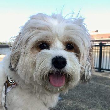 Beignet - Ms. B's Best Pet Care