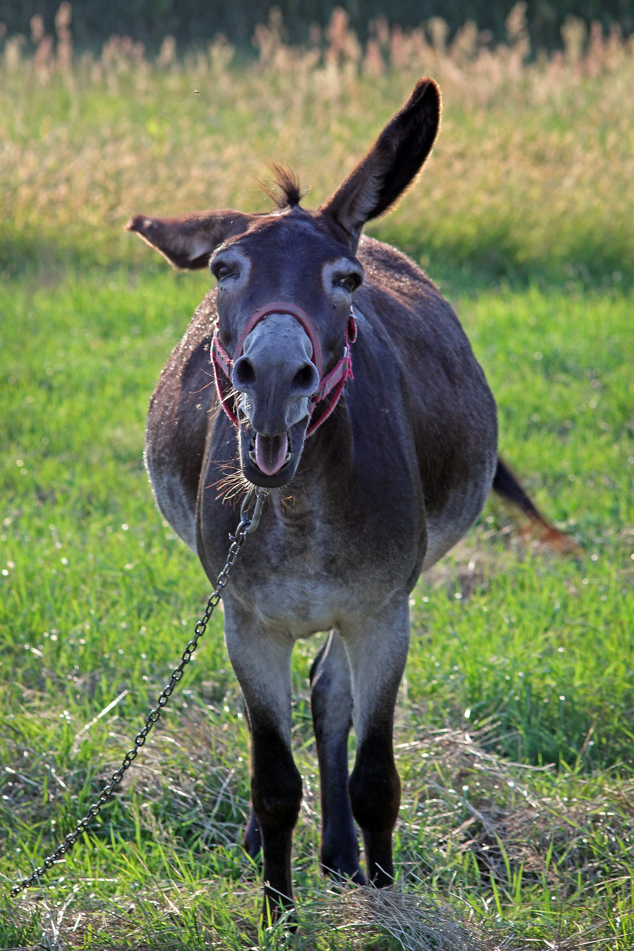 negotiation donkey