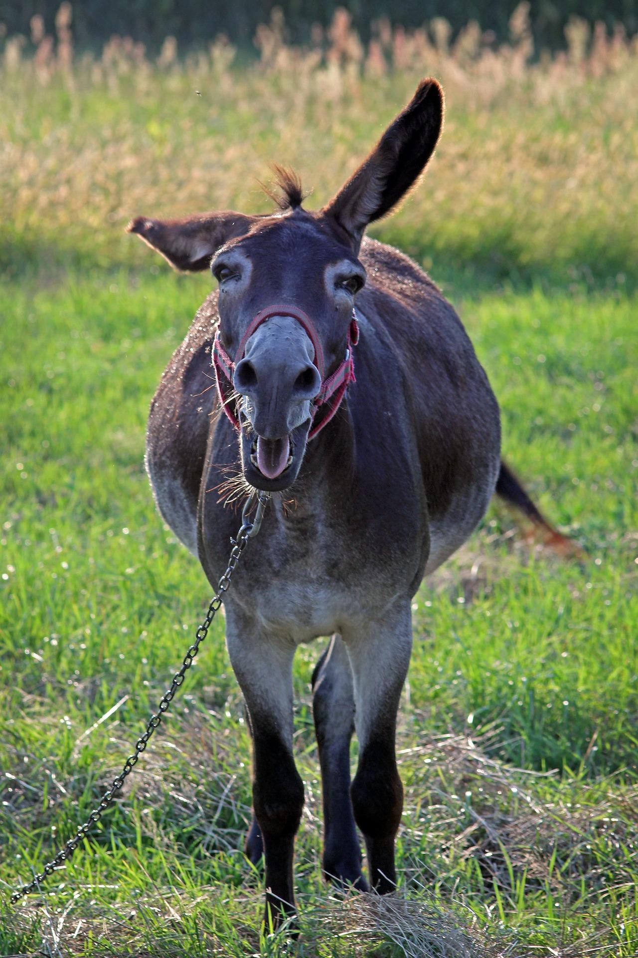 negotiation donkey