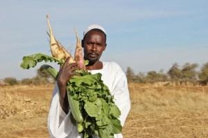 السودان يعتمد ضوابط جديدة لتحسين مناخ الأعمال