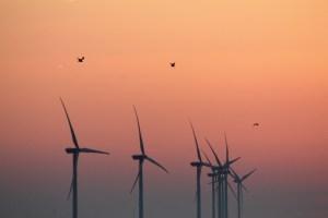 Coastal windfarm