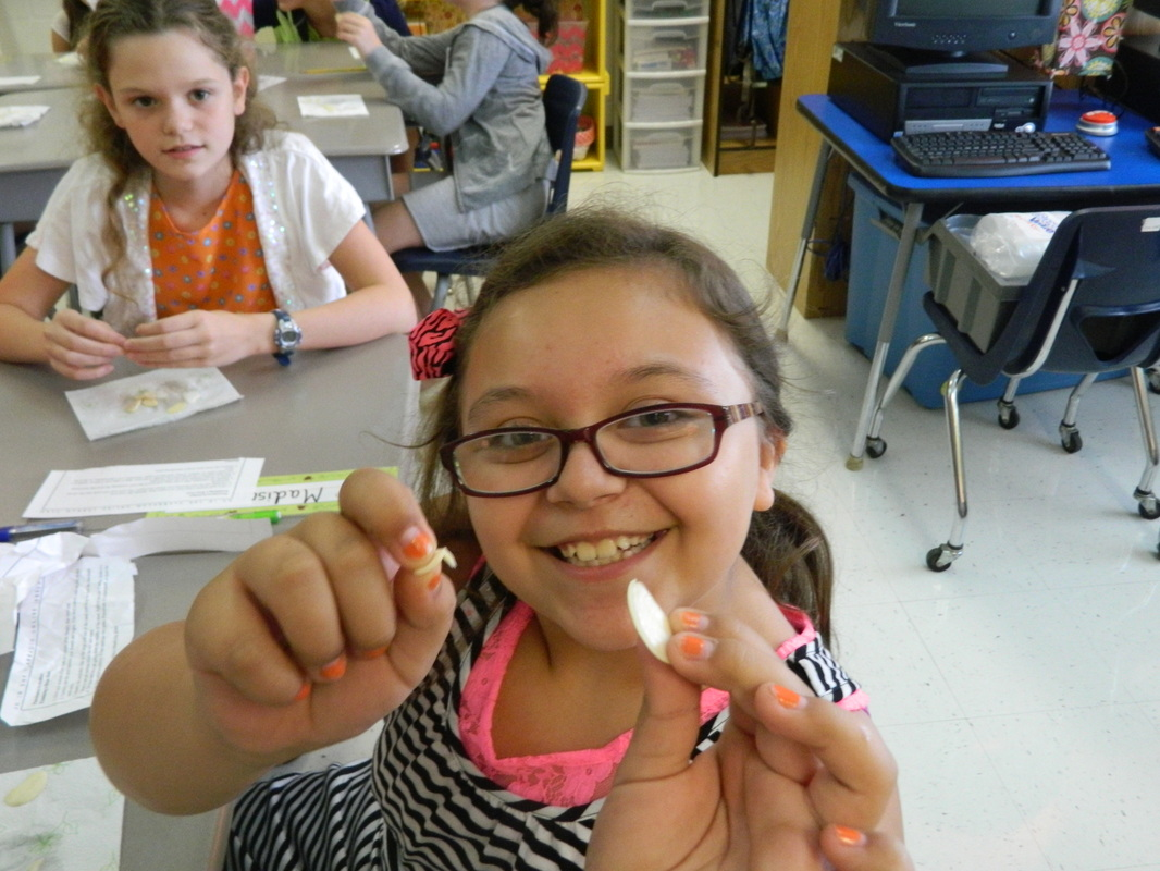 Dissecting And Planting Lima Beans