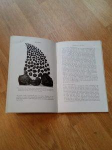Meteorites book moss 2