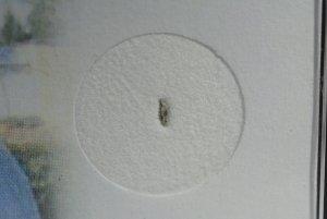 Glatton meteorite (2)