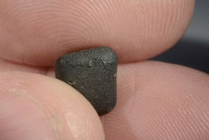 Tarda carbonaceous (39)