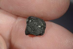 Tarda carbonaceous (47)