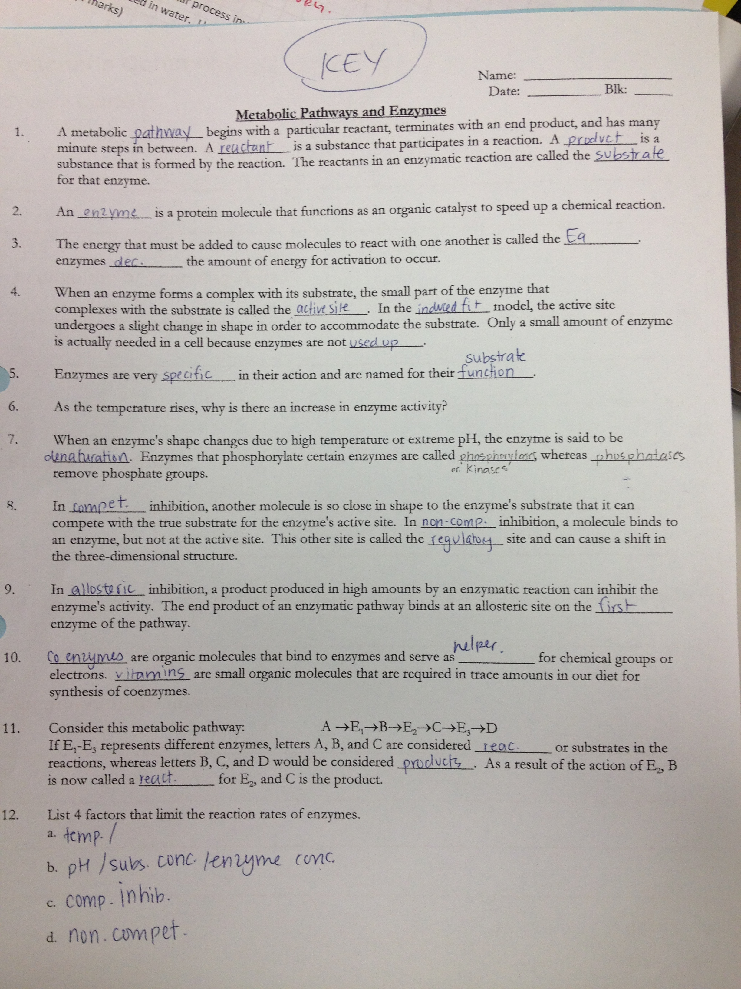 Enzyme Worksheet Answers   Ms  Ghtaura s Class Enzyme Worksheet Answers