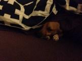 Sick dog :(