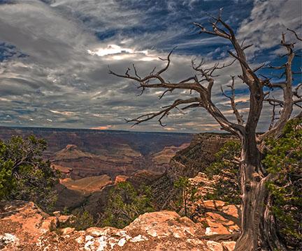 2016 Grand Canyon Tree