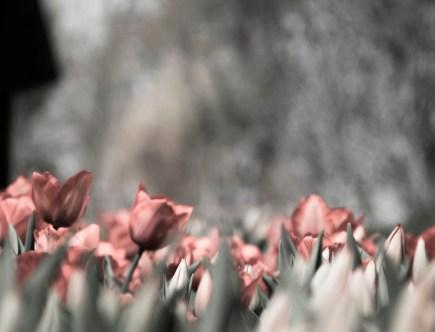 Flores en peligro de extinción.