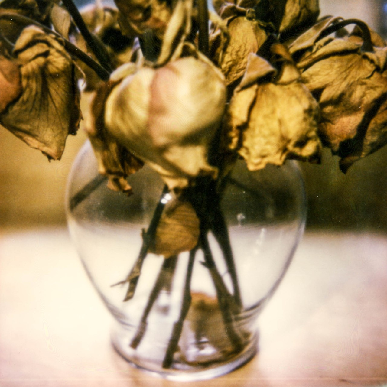 polaroid-glass-flowers007