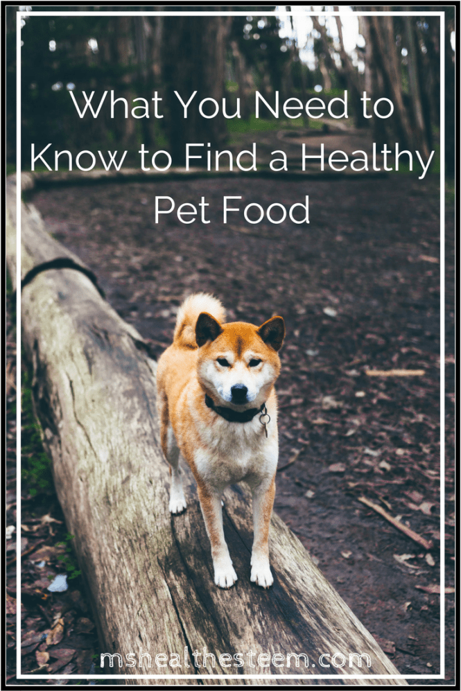 What You Need to Know to Find a Healthy Pet Food - What your dog and cats need to eat in order to be healthy. Ingredients to avoid, and how to find a healthy pet food.
