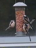Busy feeding