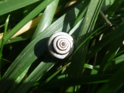 A beautiful snail shell