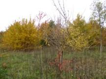 Autumn setting in
