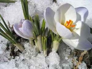 Vesna Стихи о весне красивые, для детей
