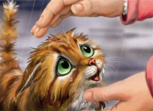 я-несчастный-голодный-котенок-3