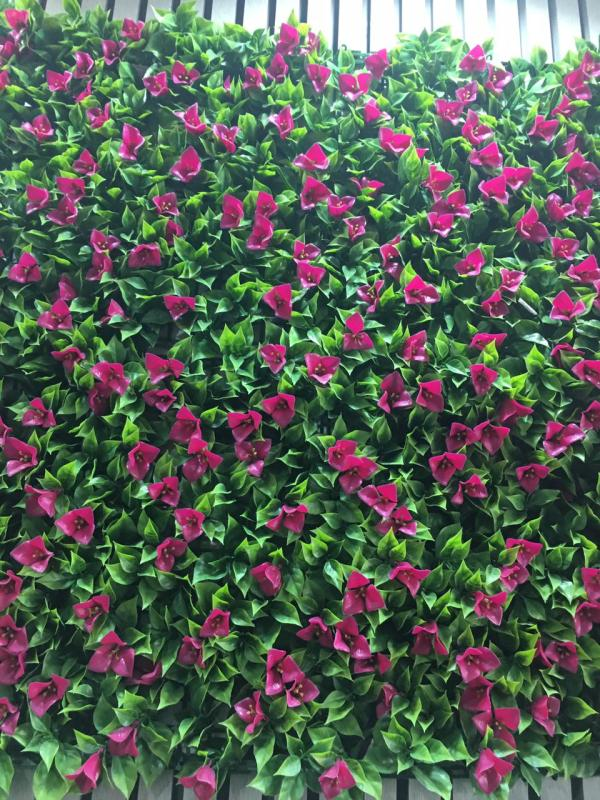 عشب جدارى صنف 1