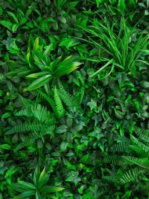 عشب اصطناعي ذو أوراق كبيرة