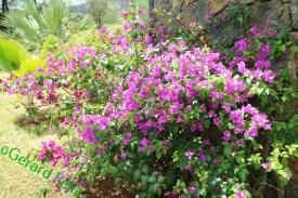flowers3 (1)