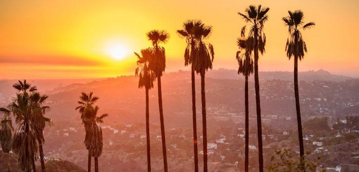 Survive Los Angeles