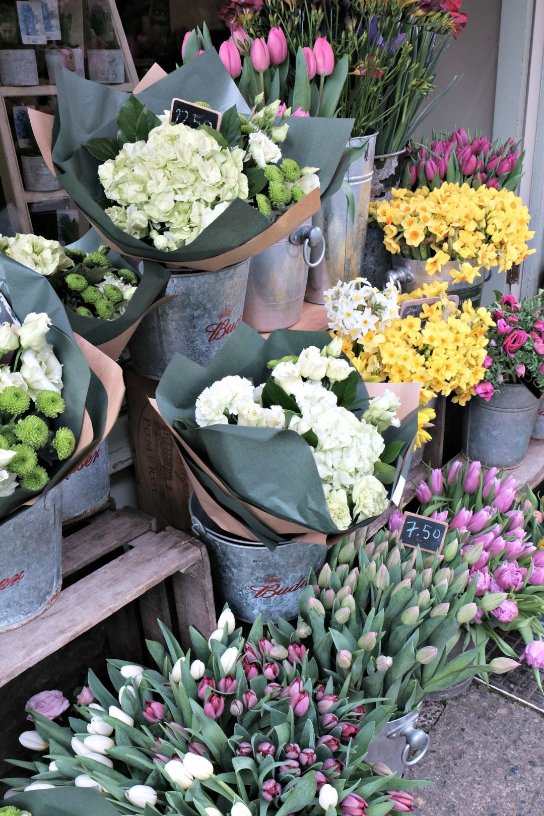 Picture of closer shot of flowers in store.  48 hours in clifton itinerary.