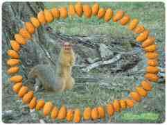 Indiana Wildlife 2012, printed postcard