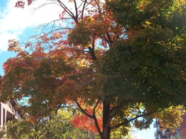Gorgeous fall color at the start of my walk