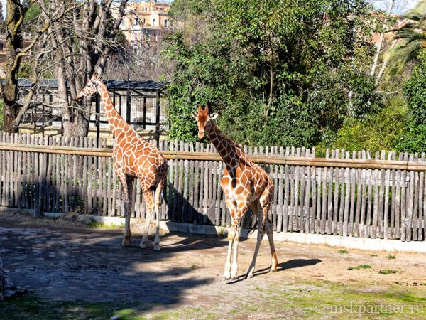 Зоопарк в Риме