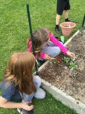 Caring for our plants