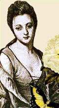 Maria Sibylla Merian