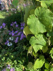 chelsea flower show 2021 pic- Kerstin Rodgers-msmarmitelover - 6
