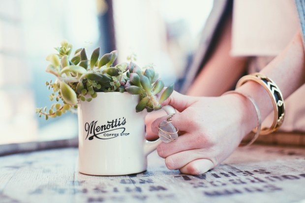 Menotti's, Coffee, Venice Beach, DIY, House of Harlow, Succulent