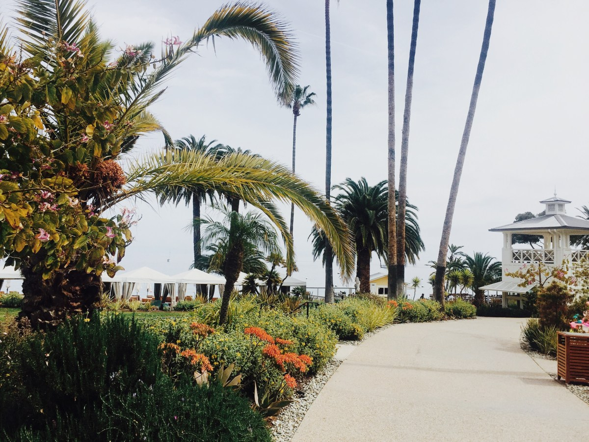Orange, Flowers, Landscape, Palms, Avalon, Catalina Island, Beauty, Nature, Resort,