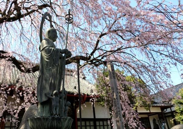 3-26 雲採寺の桜 577